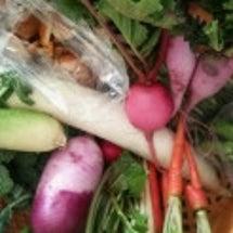 朝採れ野菜たち♪