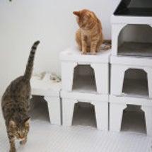 緊急★猫ハウスの大規…