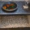 陶器の器に 落ち葉・モザイクタイル・水で飾るの画像