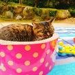 『猫神さん』王子神社…