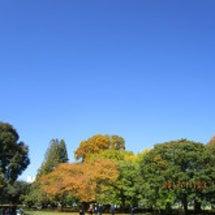 深まる秋を楽しんでま…