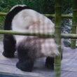 パンダの尻尾は白か?…