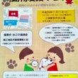 譲渡会のお知らせ→終…