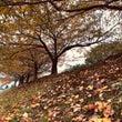 広島と散歩と