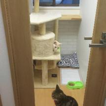 ペットホテル 猫ちゃ…
