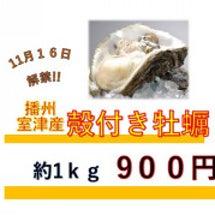 殻付き牡蠣 解禁日決…