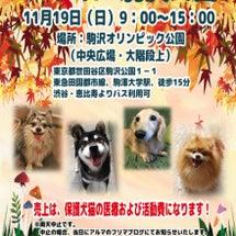 駒沢公園のフリマに参…