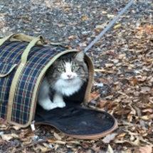 保護猫ラオくん