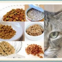 猫を助けるネコ健康講…