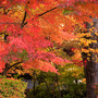 角館武家屋敷の紅葉