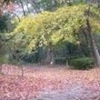 秋風に舞う落ち葉の…