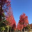 秋の風景☆