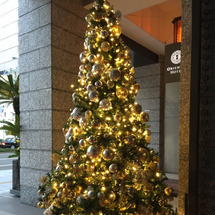 クリスマスツリーとコ…