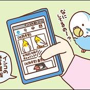 迷子のインコ(1)〜うちの子にかぎって〜