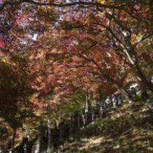 大山寺の紅葉はもう少…