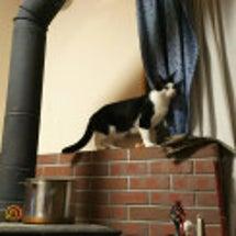 別宅の猫たち~389…
