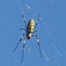 蜘蛛とのおつき合いは…