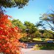 雲仙で秋キャンプ