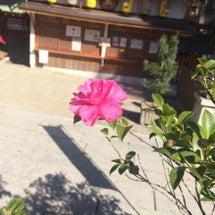 神社の景色