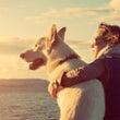 白い犬の13日間