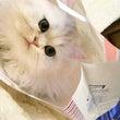 いつか猫を飼いたい。…