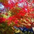 かずさ1号公園 紅葉…