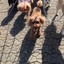 今日の犬の幼稚園Pa…