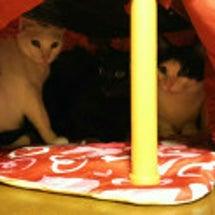 別宅の猫たち~390…