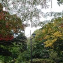 初冬の上野公園です