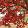 ツール・ド三河湖と秋…