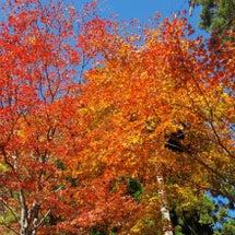 御岳山へ紅葉狩り♪♪