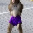 通常個サル行いました…