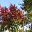 売布神社の紅葉