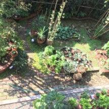 秋の我が家の庭の野菜…