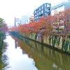 秋散歩♪の画像