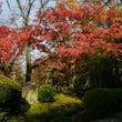 【庭園】紅葉が見頃を…