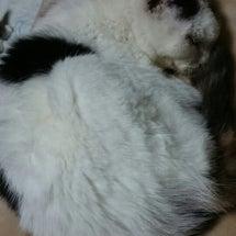 お婆ちゃん猫の『幸さ…