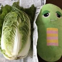 【簡単!!大根&白菜…