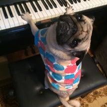 音楽家なパグ