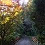 【11/15】紅葉 …