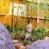 ☆湯田温泉の魅力~白狐の湯~2017.11.15 山口県☆の画像