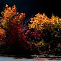 名残の秋 イオンの森…