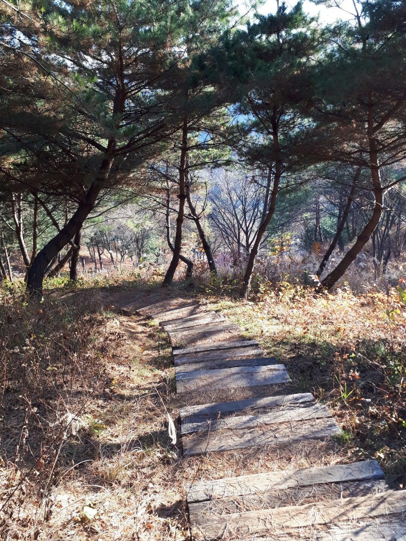 江原道(ホンチョンーアルパカワールド)②の記事より