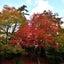 箱根の旅④ 蓬莱園