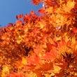 山中湖で秋を堪能。