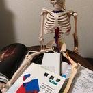 セラピストの為の解剖生理学 12月16日スタートします♪受付中の記事より