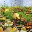 秋の散策に。自然の中…