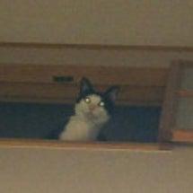 別宅の猫たち~391…