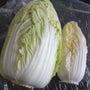 白菜がふたっつ