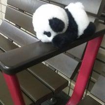 迷子のパンダ?